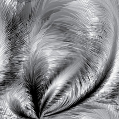 Black and white Feathers Seamless Pattern