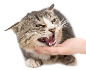 hand stroking a cat on a white background