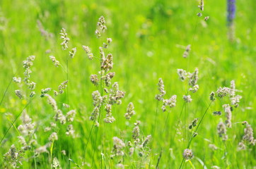 field green grass landscape background