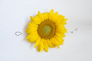 sunflower - summer concept