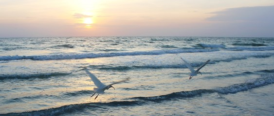 Seagulls at Beach - Sunset in Florida