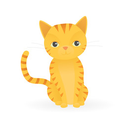 Cute orange cat