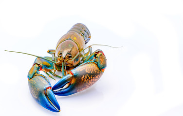 Fresh water crayfish on white background with copy space.