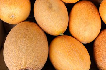 Cantaloupe melons at  at local farm market
