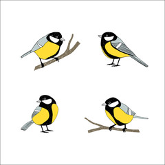 Birds sketch set. Tomtit.