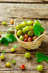 ripe, fresh, organic gooseberries