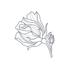 Rose Bud Monochome Drawing For Coloring Book