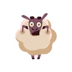 Sheep Being Shocked