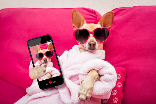 dog selfie wellness spa