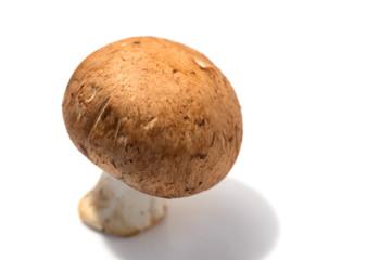マッシュルーム(ブラウン種)