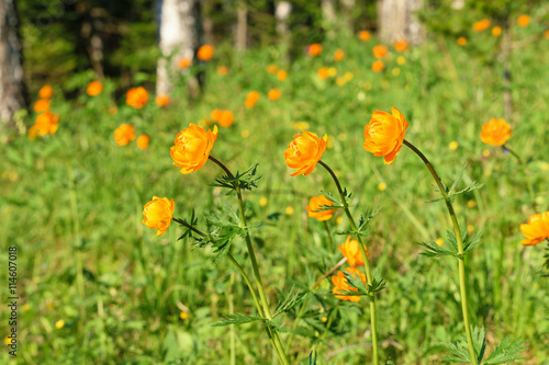 Flower background with yellow orange and white meadow flowers flower background with yellow orange and white meadow flowers mightylinksfo