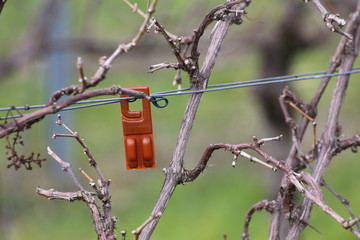 Plastic device containing pheromones as an insecticide replacement against the vine moth