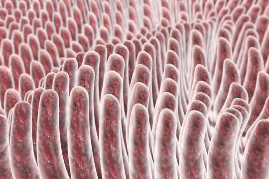 Villi of small intestine, 3D illustration. Intestinal environment, close-up view