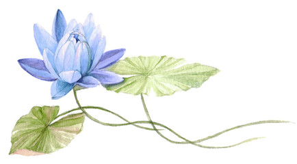 Water Lily or lotus flower on the water (Blue). Hand drawn, watercolor botanical illustration.