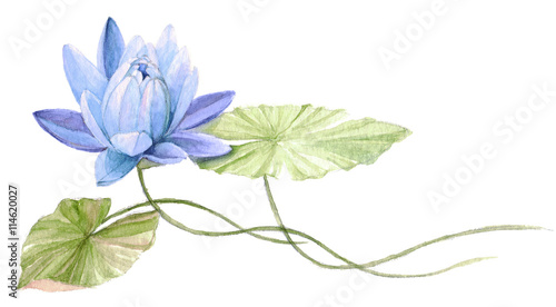 Water Lily Or Lotus Flower On The Water Blue Hand Drawn