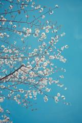 spring sakura pink flower and water background, sakura flower, Sakura Flower tree, Sakura tree, Sakura backgrounds, sakura textures, sakura blooming, Floral wallpaper, Beautiful sakura