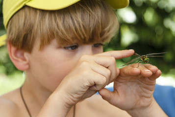 The curious boy touching the dragonfly on his hand