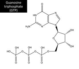 Molecular structure of Guanosine triphosphate