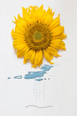 autumn concept , sunflower - sun and rain with clouds