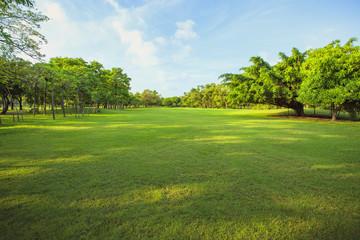 Fotobehang Gras morning light in public park and green grass garden field ,tree