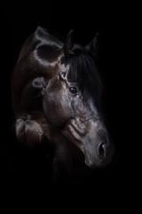 Black stallion portrait on black
