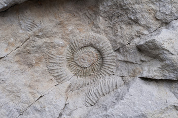 fossils shells