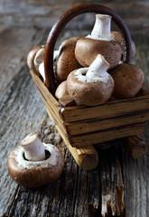 Fresh mushroom champignon
