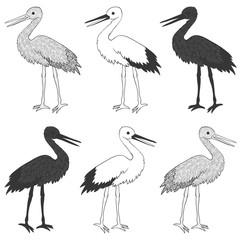 Stork bird vector set