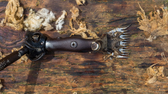 old fashion sheep shearing clippers on wooden background