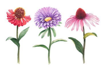 Watercolor illustrations of flowers