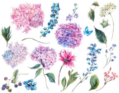 Set vintage watercolor elements of Hydrangea