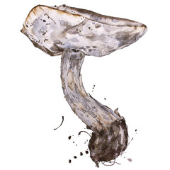Watercolor illustrations of mushrooms. Set of mushrooms isolated on white background.