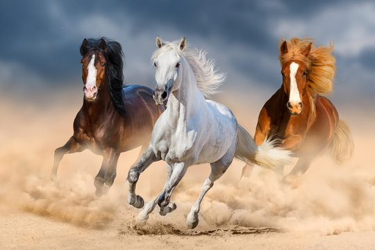 Three horse with long mane run gallop in desert