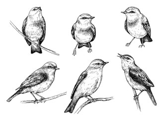 Birds sketch set