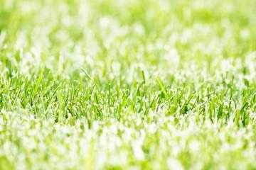 grass plot
