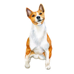 Watercolor closeup portrait of cute Basenji breed dog isolated on white background. Shorthair African Barkless Dog hound type hunting dog. Hand drawn sweet home pet. Greeting card design. Clip art