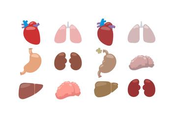 Human internal organs and vector internal organs human liver medicine anatomy. Internal organs medical system biology and kidney body internal organs. Physiology element internal organs.