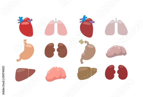 Human Internal Organs And Vector Internal Organs Human Liver