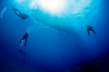 Wall Mural - Diver