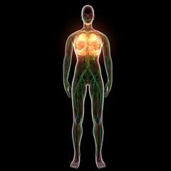 3D Rendering Intestinal internal organ