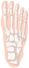 Bone x-ray for gout toe