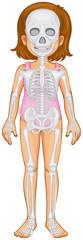 Skeletal system in human girl