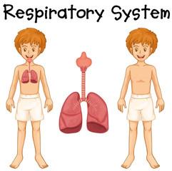 Respiratory system in boy
