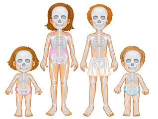 Skeletal system of human