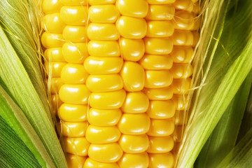Wall Mural - Macro photo of yellow corn background, healthy and tasty food