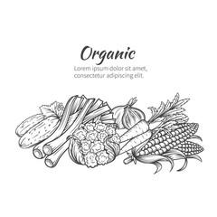 hand drawn vegetables