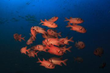School of fish underwater in ocean