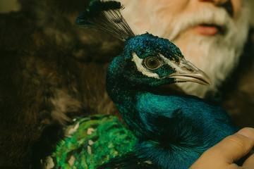bearded man with peacock
