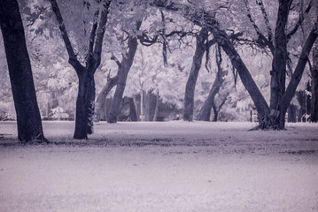 Infra-red photo Landscape garden tree and grass