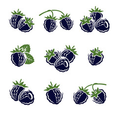 Blackberry set. Vector